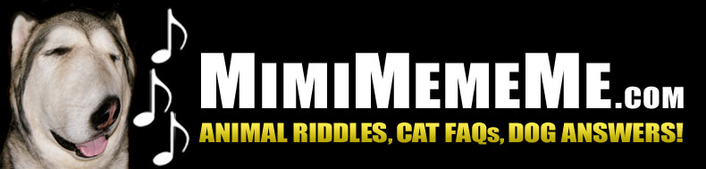 MimiMemeMe.com - Animal Riddles, Cat FAQs, Dog Answers!