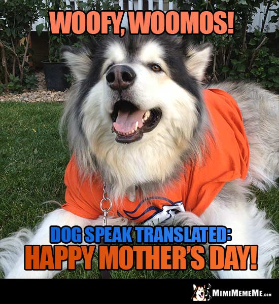 Denver Broncos Dog Says - Woofy, Woomos! Dog Speak Translated: Happy Mother's Day!