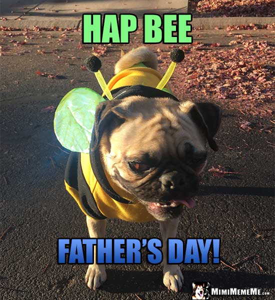 Pug Wearing Bee Costume Says: Hap Bee Father's Day!