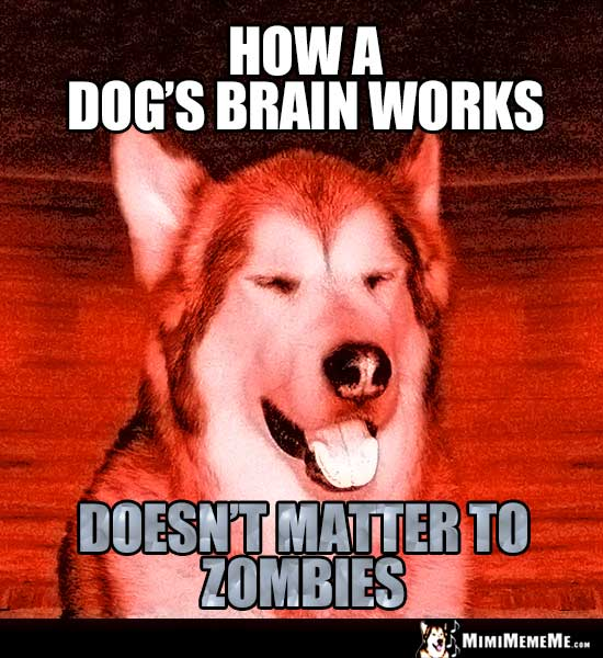 Dog Humor: How a dog's brain works doesn't matter to zombies.