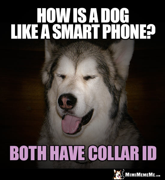 Handsome Malamute Asks: How is a dog like a smart phone? Both have Collar ID