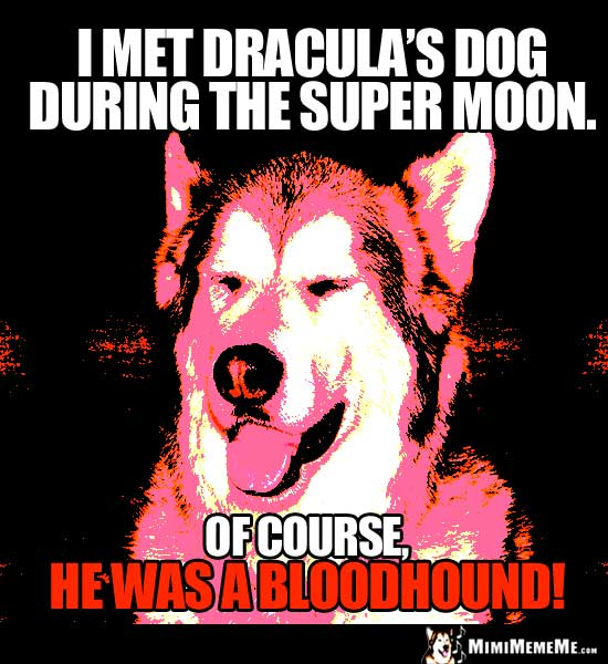 Smiling Dog Says: I met Dracula's dog during the super moon. Of course, he was a bloodhound!