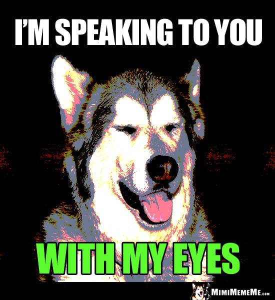 Dog with Eyes Shut Says: I'm speaking to you with my eyes.