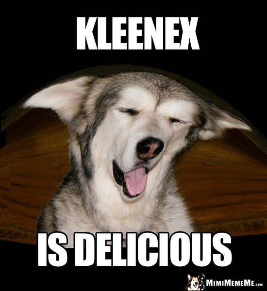 Playful Pup Says: Kleenex is Delicious