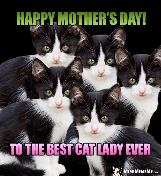 Funny Kitten Siblings Say: Happy Mother's Day! To the Best Cat Lady Ever!