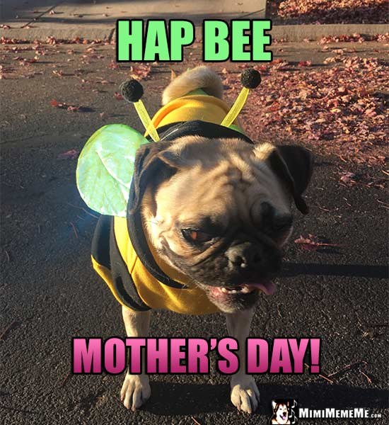 Pug Dressed as Bee Says: Hap Bee Mother's Day!