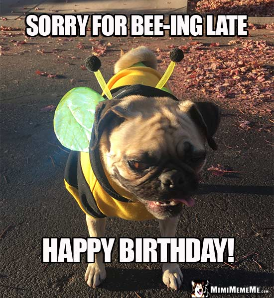 Pug in Bee Costume: Sorry for bee-ing late. Happy Birthday!