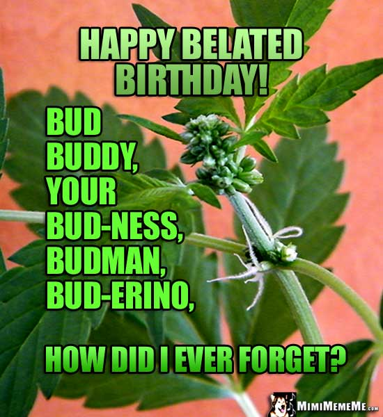 Hermaphrodite Pot Bud Says: Happy Belated Birthday! Bud, buddy, your bud-ness, budman, bud-erino. How did I ever forget?