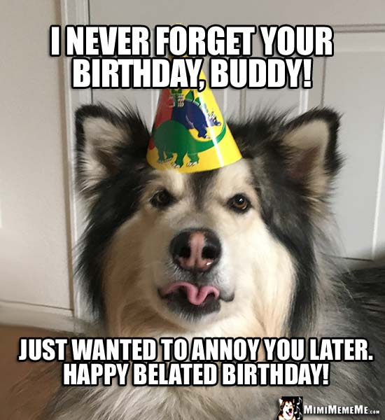 Dog in Party Hat Says: I never forget your birthday, buddy! Just wanted to annoy you later. Happy Belated Birthday!