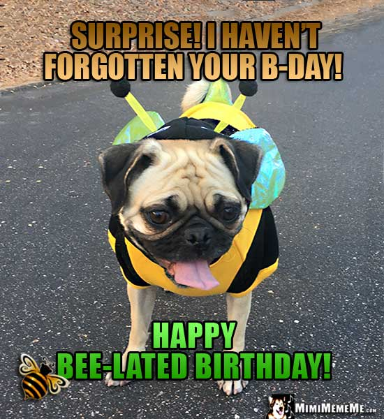 Pug in Bee Costume Says: Surprise! I haven't forgotten your B-Day! Happy Bee-Lated Birthday!