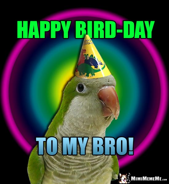 Quaker parrot wearing birthday hat says: Happy Bird-Day to My Bro!