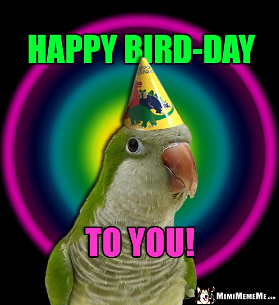 Parrot Wearing Party Hat: Happy Bird-Day to You!