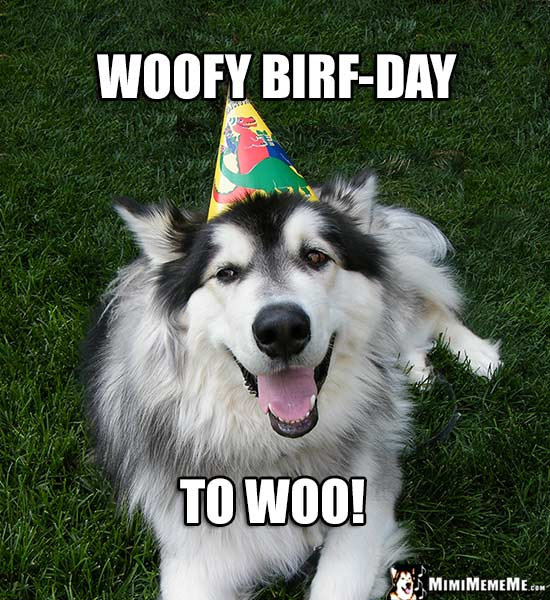 Smiling Dog Wearing Birthday Party Hat: Woofy Birf-Day to Woo!
