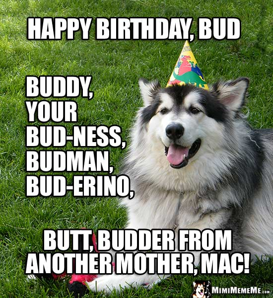 Dog in Party Hat: Happy Birthday, Bud, buddy, your bud-ness, budman, butt...