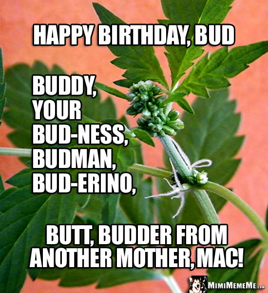 Pot Plant: Happy Birthday, Bud, buddy, your bud-ness, budman, bud-erino, butt...