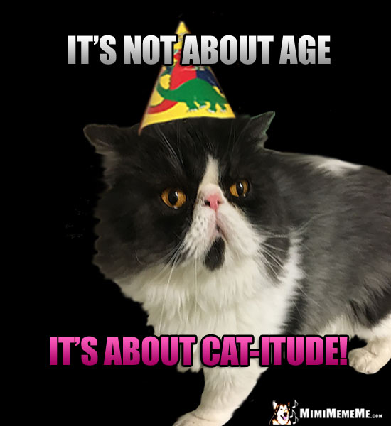 Birthday Humor: It's not about age, it's about Cat-itude!