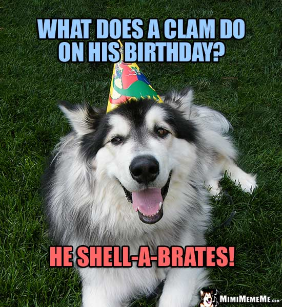 Dog in Party Hat: what does a clam do on his birthday? He shell-a-brates!