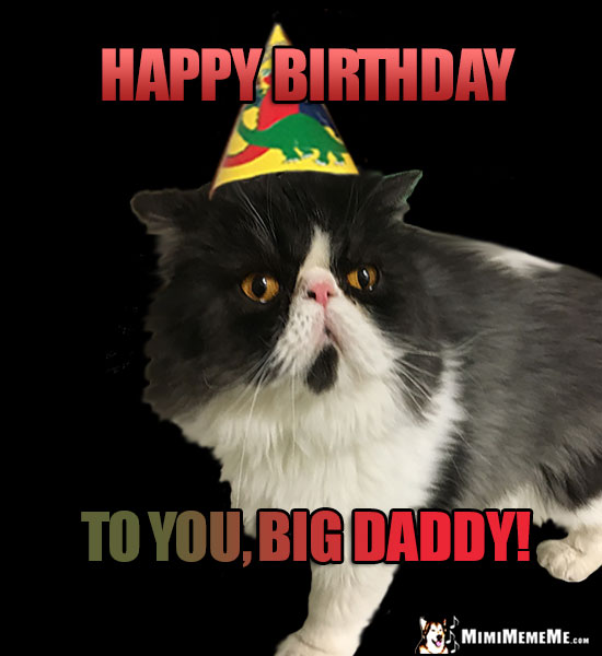 Persian Cat Wearing Party Hat Says: Happy Birthday to You, Big Daddy!