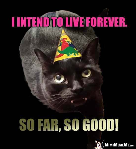 Funny Birthday Cat: I intend to live forever. So far, so good!