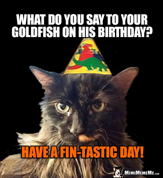 Party Cat: What do you say to your goldfish on his birthday? Have a fin-tastic day!