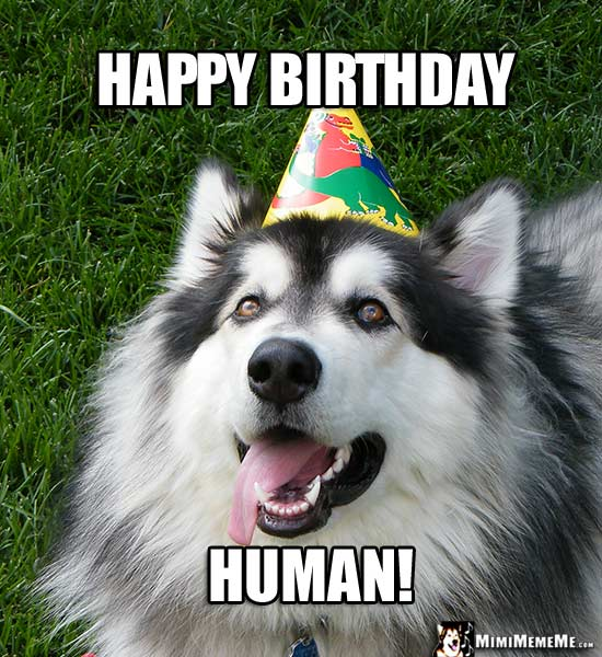 Handsome Dog Wearing Party Hat Says: Happy Birthday Human!