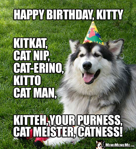 Party Dog Says: Happy Birthday Kitty, Kitteh, Your Purrness, Cat Meister, Catness!