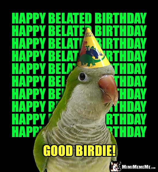 Parrot Wearing Party Hat Repeatedly Says: Happy Belated Birthday... Good Birdie!