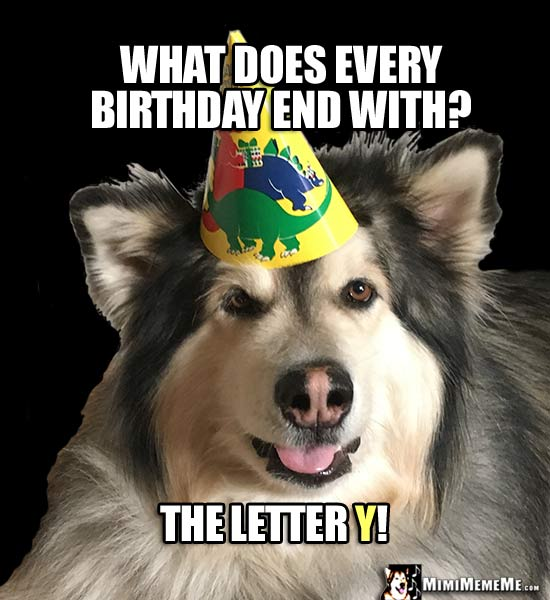 Funny Party Dog Asks: What does every birthday end with? The letter Y!