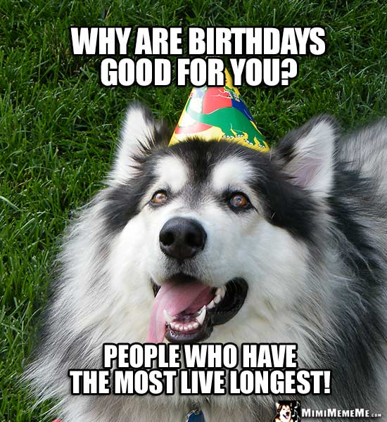 Dog in Party Hat Asks: Why are birthdays good for you? People who have the most live longest!