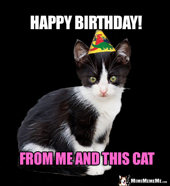 Mew: Happy Birthday! From Me and This CAT