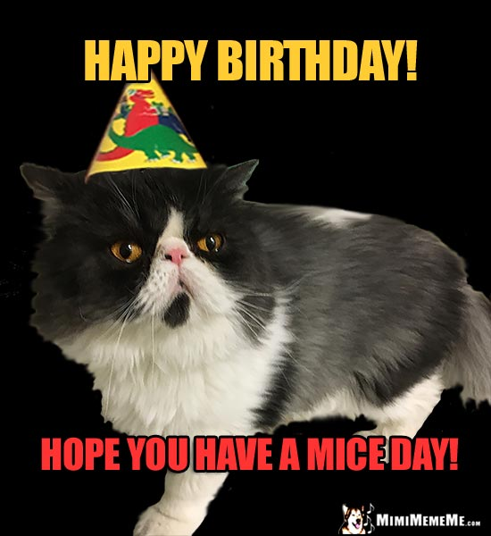Unenthusiastic Party Cat Says: Happy Birthday! Have a Mice Day!