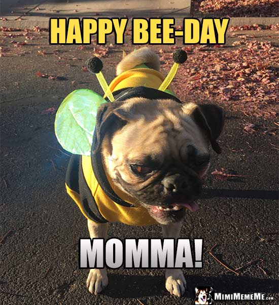Pug Wearing Bee Outfit Says: Happy Bee-Day Momma!