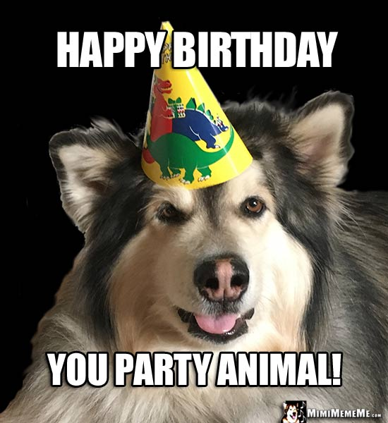 Handsome Dog in Party Hat Says: Happy Birthday You Party Animal!