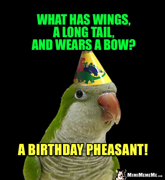 Party Party Riddle: What has wings, a long tail, and wears a bow? A birthday pheasant!