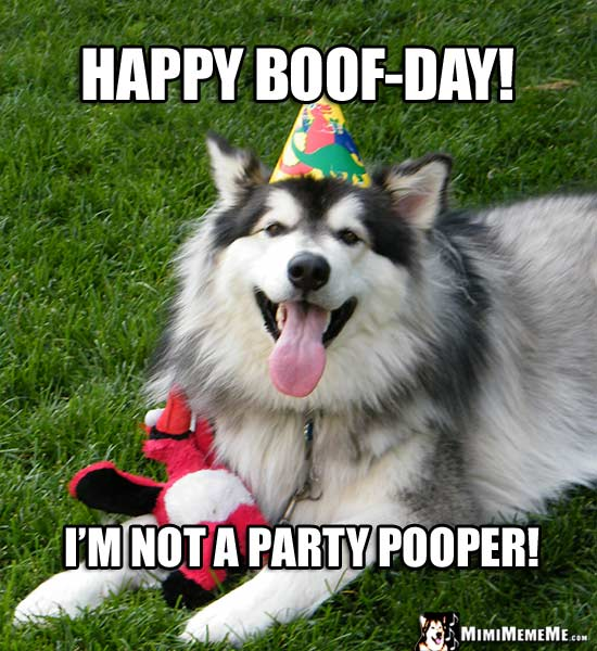 Handsome Dog Wearing Party Hat Says: Happy Boof-Day! I'm not a party pooper!