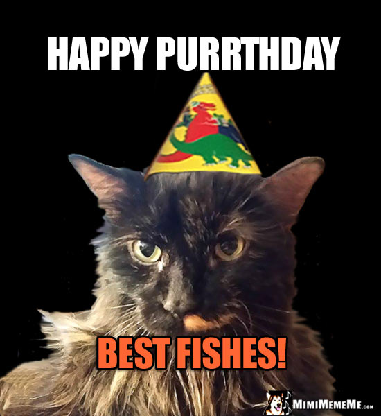 Funny Party Cat Says: Happy Purrthday. Best Fishes!