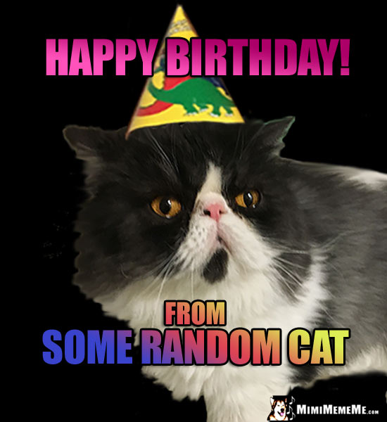 Cat Wearing Party Hat Says: Happy Birthday from Some Random Cat