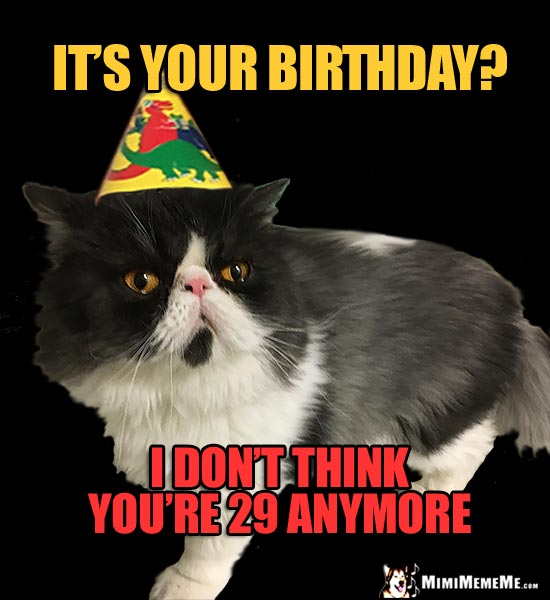 Bored Party Cat Says: It's your birthday? I don't think you're 29 anymore.