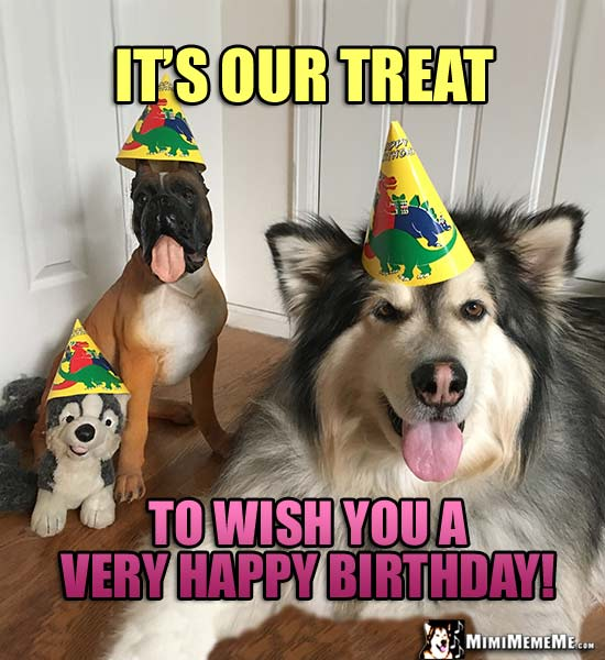 Dogs in Party Hats Say: It's our treat to wish you a very happy birthday!
