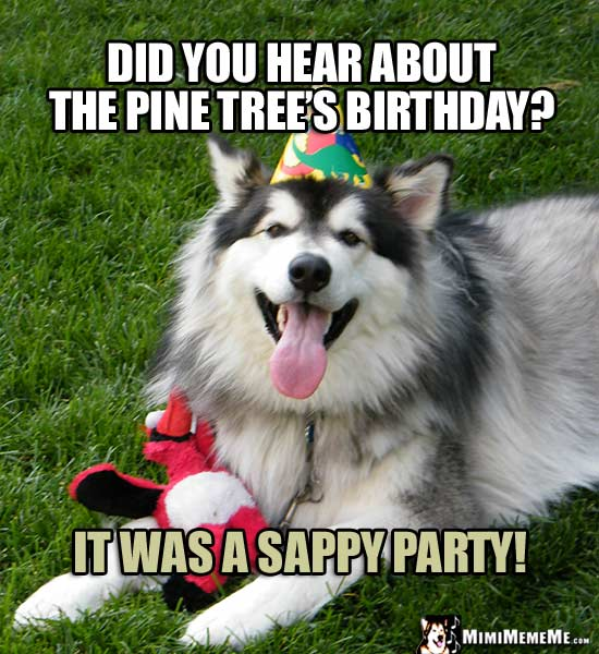 Birthday Dog Asks: Did you hear about the pine tree's birthday? It was a sappy party!