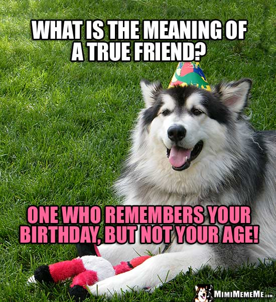 Dog, Man's Best Friend Asks: What is the meaning of a true friend? One who remembers your birthday, but not your age!