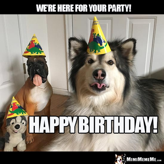 Party Dogs Say: We're here for your party! Happy Birthday!
