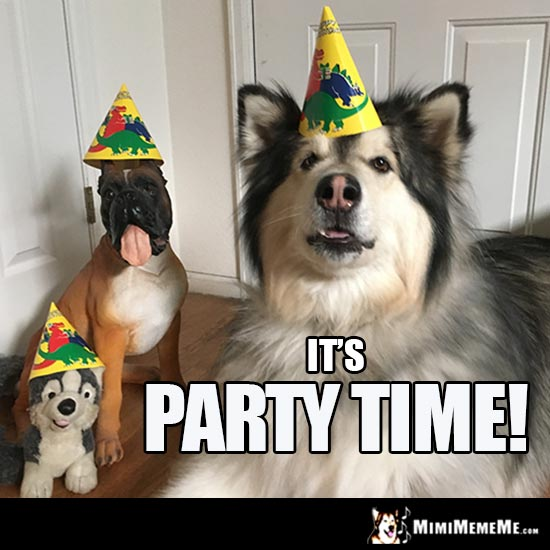 Party Dogs Say: It's Party Time!