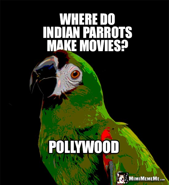 Silly Parrot Humor: Where do Indian parrots make movies? Pollywood
