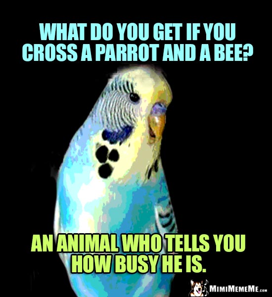 Parrot Riddle: What do you get if you cross a parrot and a bee? An animal who tells you how busy he is.