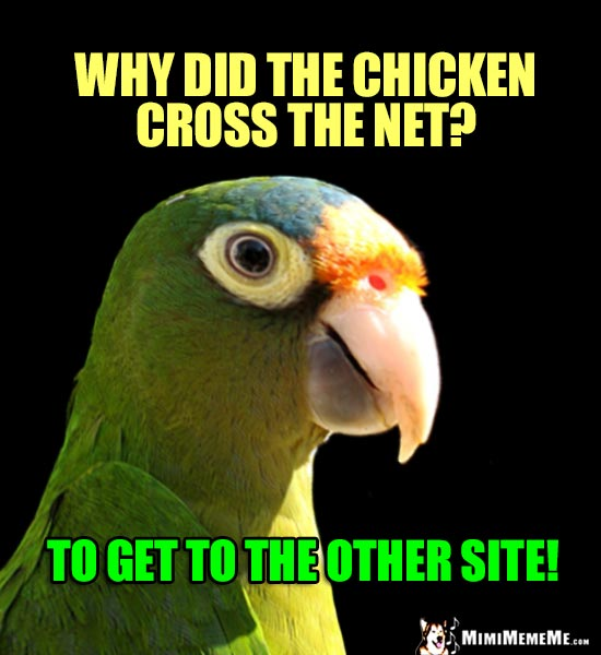 Hi-Tech Bird Humor: Why did the chicken cross the net? To get to the other site!