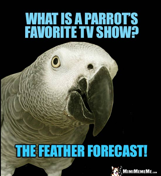 African Grey Parrot Asks: What is a parrot's favorite TV show? The Feather Forecast!