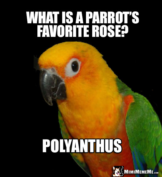 Pretty Bird Asks: What is a parrot's favorite rose? Polyanthus