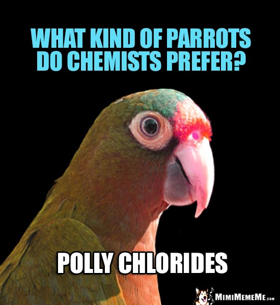Smart Parrot Asks: What kind of parrots do chemists prefer? Polly Chlorides