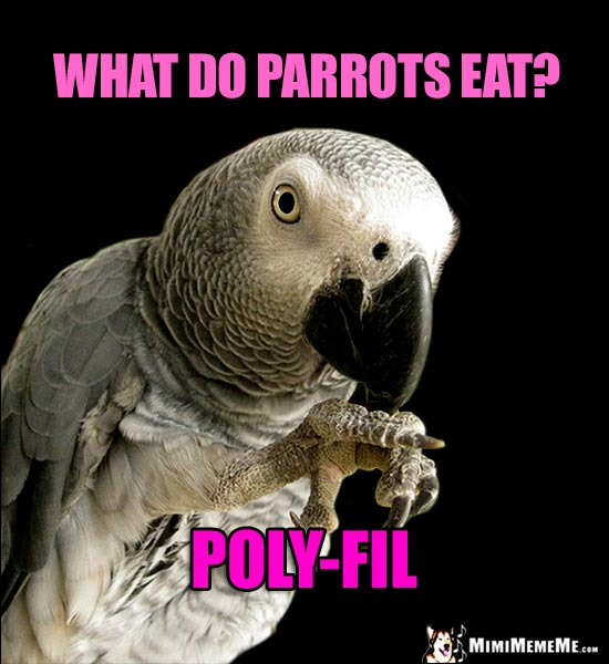 Parrot Tells a Silly Joke: What do parrots eat? Poly-Fil